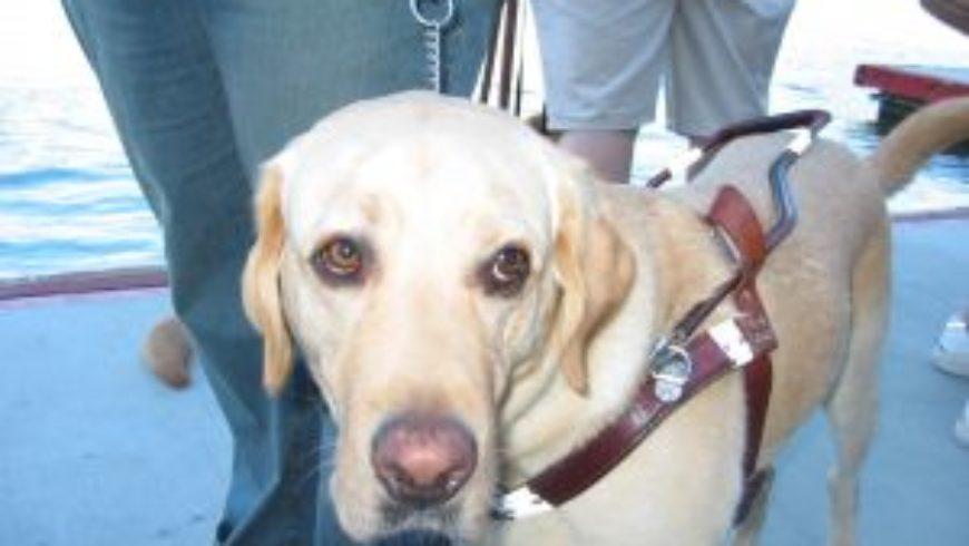 Ulga rehabilitacyjna – samochód, pies, przewodnik, leki.